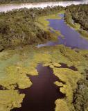 humedales del rio beni