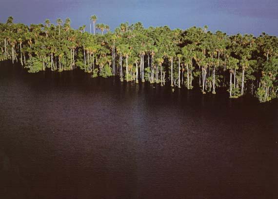 isla de palmeras laguna el triunfo