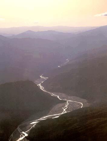 rio caine